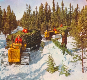 Caterpillar D-4 tractors (1950) pulling christmas treee sleds, Heimburger House